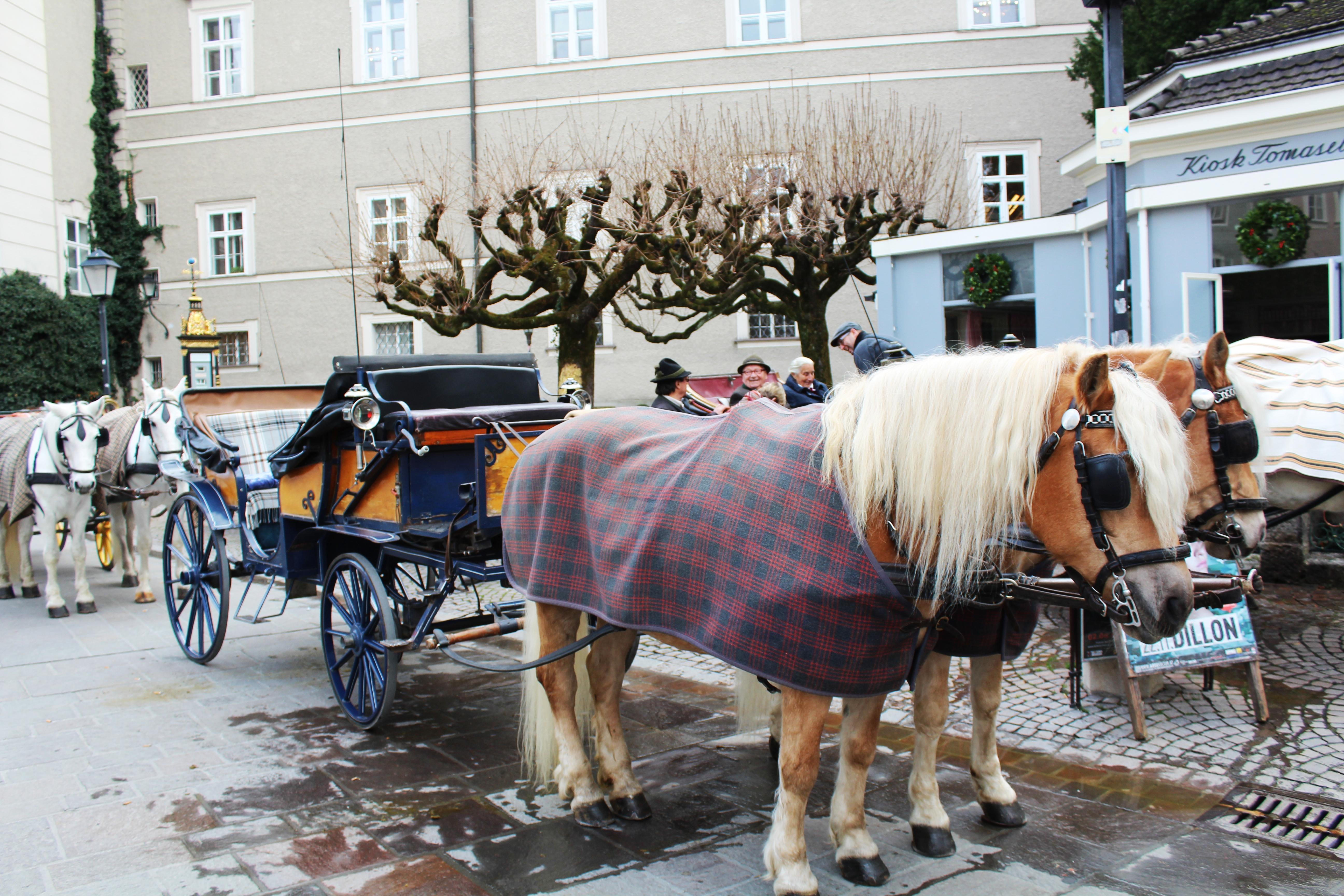 Pferdekutschen_Salzburg
