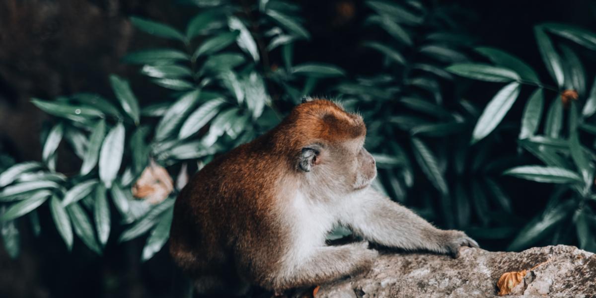 MALAYSIA: Geheimtipp Ipoh – Sightseeing, Essen und Fotospots